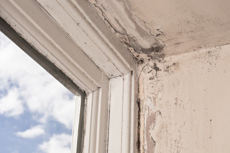 Mould and wood rot on a window frame and wall