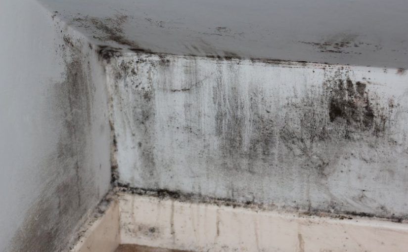 How to get rid of Mould on Walls!